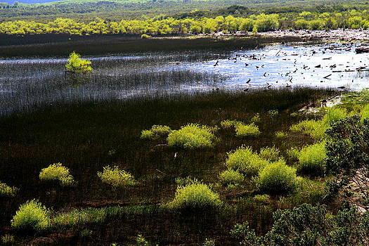 Carretera Austral river by Arie Arik Chen