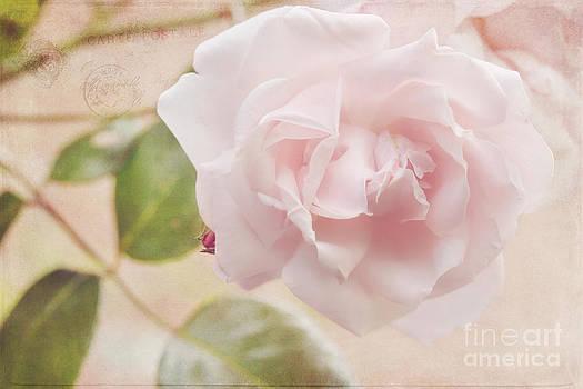 LHJB Photography - Carte Postale Pink Rose
