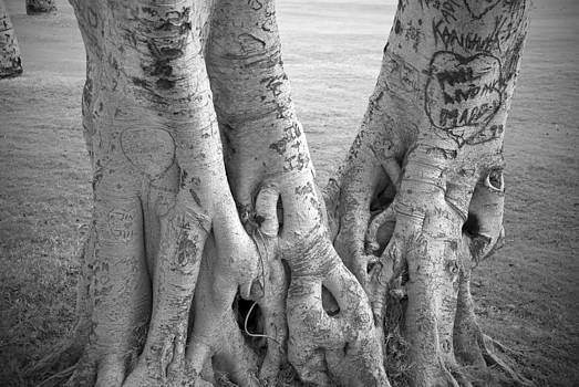 Carved Roots by Chris Ann Wiggins