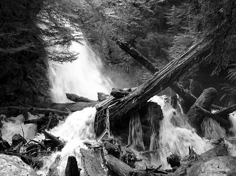 Cascade Log Jam - Mountain Waterfall - British Columbia - Black and White by Ian Mcadie
