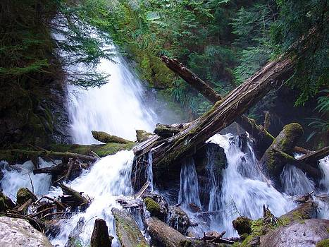 Cascading Log Jam - Mountain Waterfalls - British Columbia by Ian Mcadie