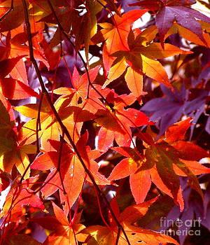 Cascading Crimson by Carolyn Kami Loughlin