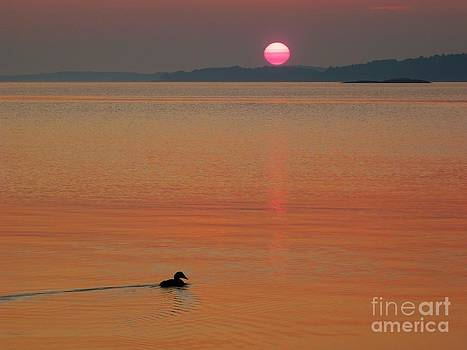 Christine Stack - Casco Bay Sunrise with Eider Duck