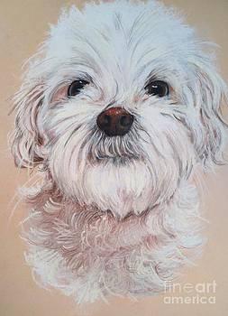 Casey by Marilyn Williscroft