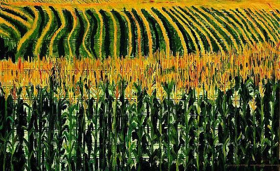 Cash Crop Corn by Gregory Allen Page