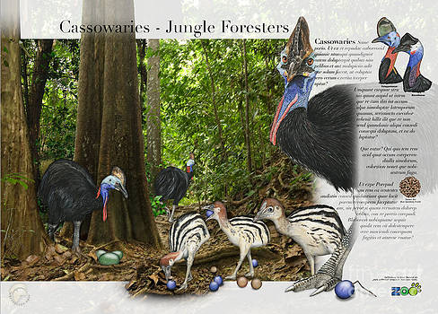 Cassowaries in their Habitat - Cassowary - Nature Interpretive Panel - Zoo Tafel - Zoo Paneel- Stock by Urft Valley Art