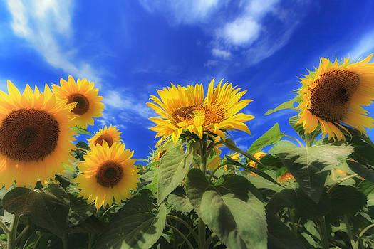Sylvia J Zarco - Cast Your Face to the Sun