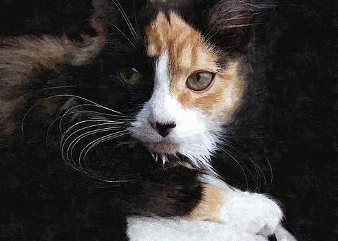 Cat by Allen Beilschmidt