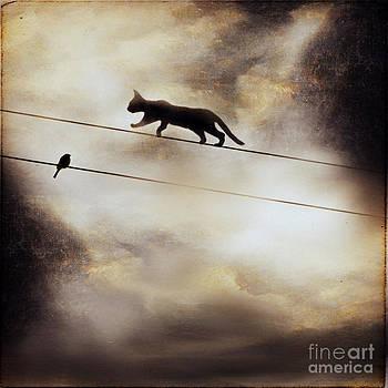 Cat And Bird by Sylvia Lakoma