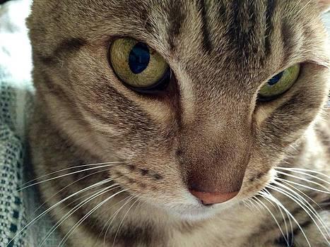 Cat attitude by Dina Calvarese