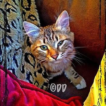 Cat by Danielle McNeil