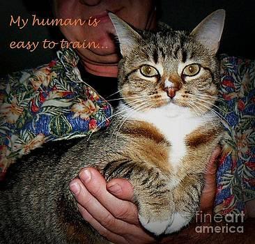 Diana Besser - Cat Driven