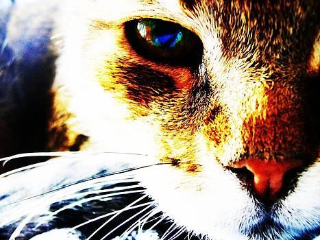 Cat Effects by Noah