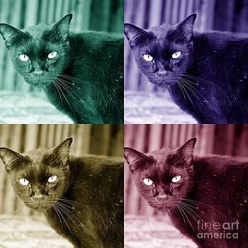Cat eye  by Bobby Mandal