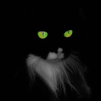Gothicrow Images - Cat Eyes