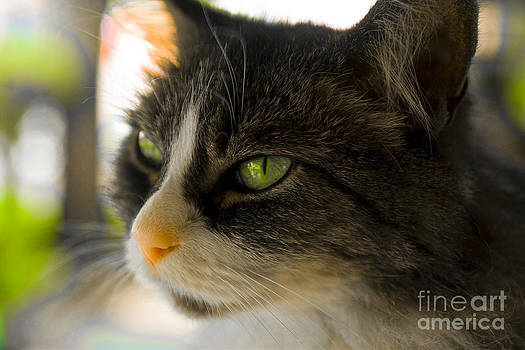 Cat Eyes by Margaret Guest