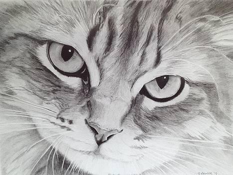 Cat Eyes by Sandra Weiner