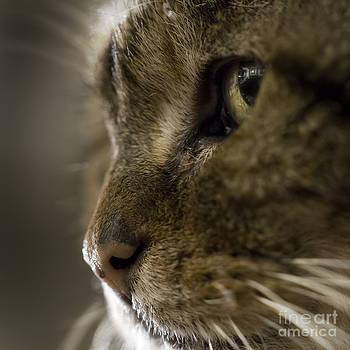 Angel Ciesniarska - cat face