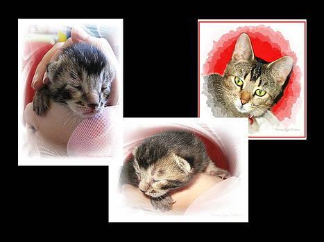 Joyce Dickens - Cat Family