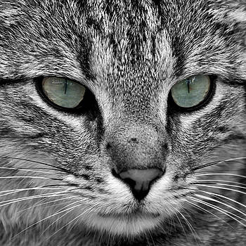 Cat by Hans-Juergen Sommer