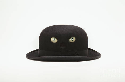 Cat Hat by Kitty Bitty