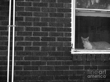 Craig Pearson - Cat House