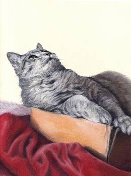 Cat in a Box by Pamela Humbargar