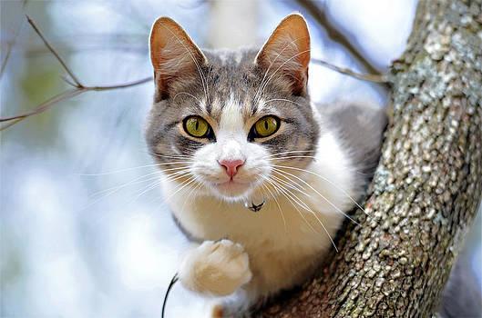 Cat in a Tree by Susan Leggett