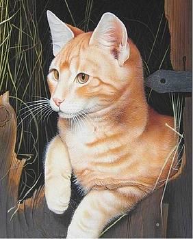 Cat in a Window by Ankit Mehta