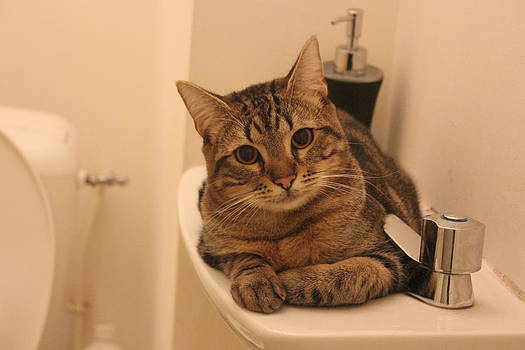 Cat in the sink by Shikha N
