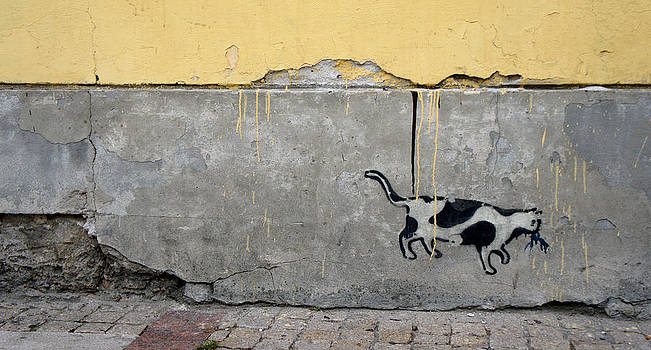 Cat by Kees Colijn