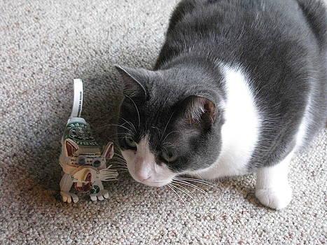 Alfred Ng - cat meets cat