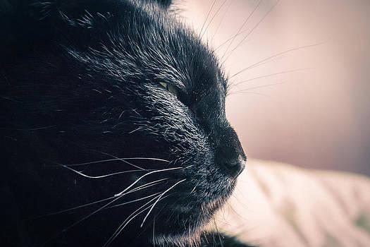 Cat Nap by Julie Jamieson