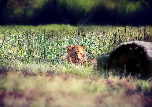 Cat Napping by Melanie Lankford Photography