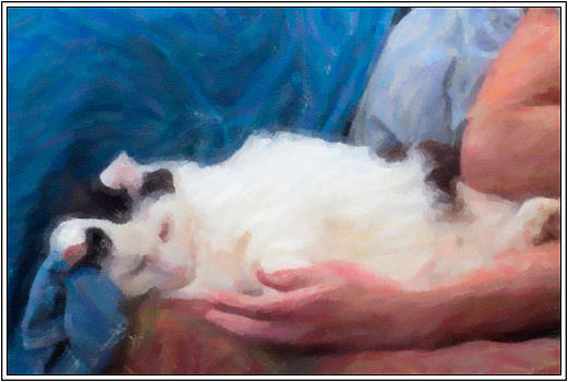 Cat Napping by Sandy Scharmer