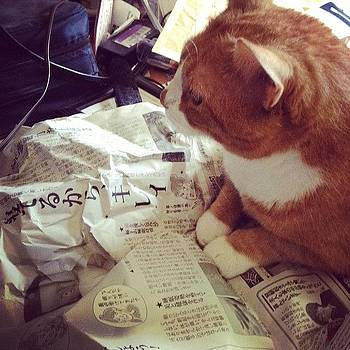 Cat On A Newspaper. Silly Kitty! #cat by Kelli Donnelly