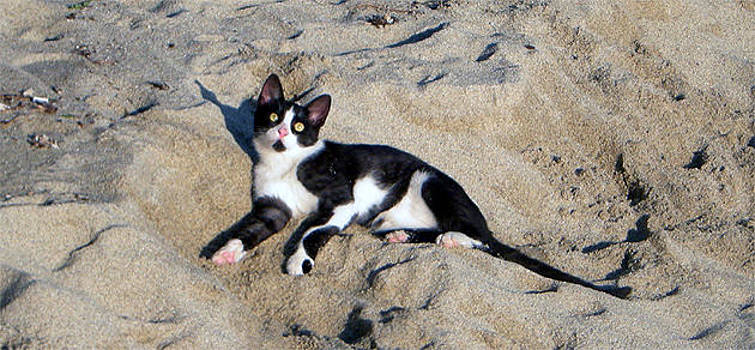 Cat On The Beach by Emilija Cerovic