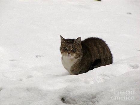 Cat on the snow by Irina Gladkaja