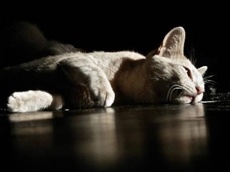 Laura Carter - Cat Photograph