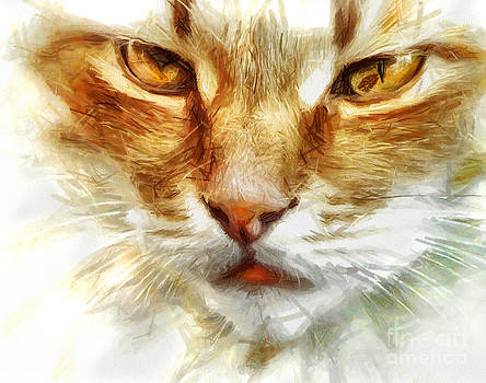 Cat Portrait - Drawing by Daliana Pacuraru