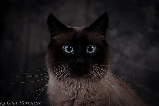 Cat Portrait by Gina Harmeyer