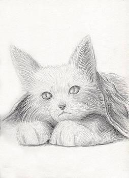 Jeanette K - Cat Portrait