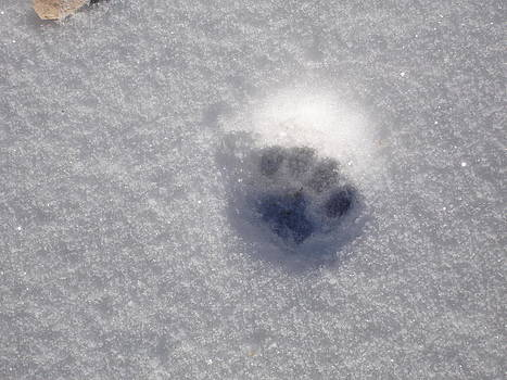 Cat Snow Print by Kim Baker