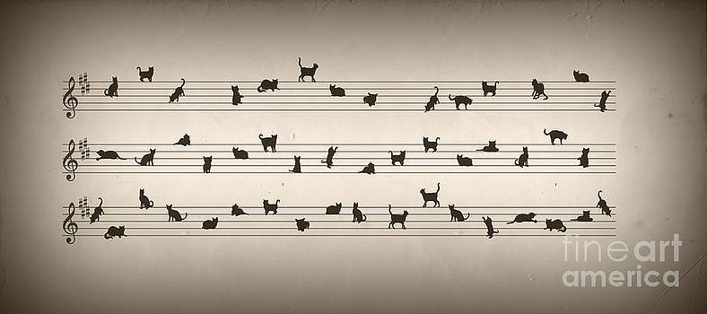 Cat Song by Kitty Bitty