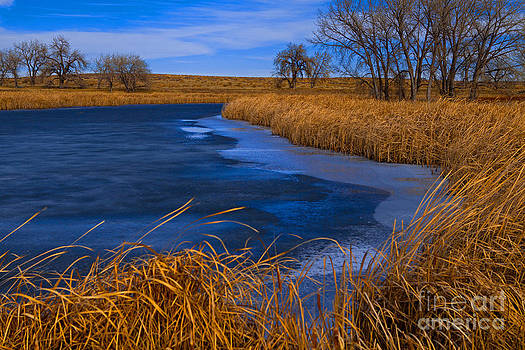 Cat Tails and Ice by Barbara Schultheis