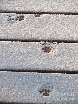 Cat Tracks by Tracy L Teeter