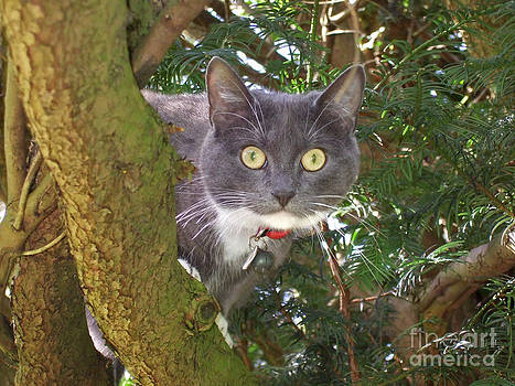 Cat up a tree by Elizabeth Debenham