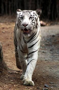 Ramabhadran Thirupattur - Cat Walk