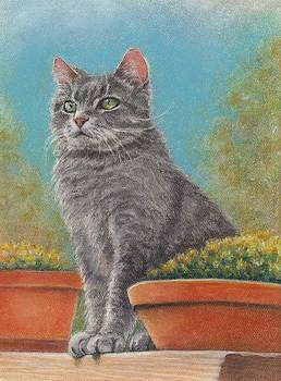 Cat With Flower Pots by Pamela Humbargar