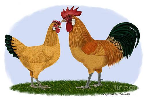 Catalana Rooster and Hen by Leigh Schilling